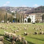 Fabbricati rurali e richiesta di attribuzione ruralità: nuovo Decreto, nuove modalità
